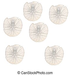 Sand Dollars - A background I made of sand dollars