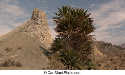 rock and palm tree with blue sky