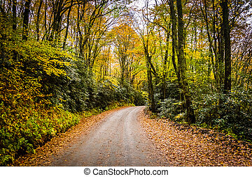 Autumn color along a dirt road near the Blue Ridge Parkway...