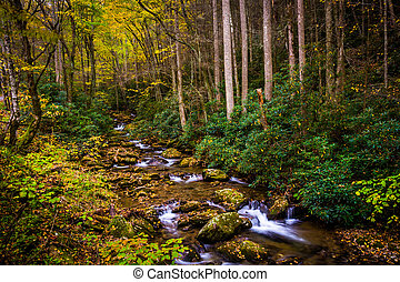 Autumn color and cascades on Stoney Fork, near the Blue...