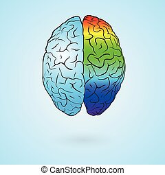 Colored brain - Colored left brain and right brain. Concept...