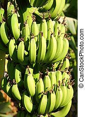 Banana plantation in sun