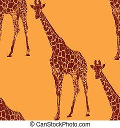 vetorial, Ilustração, de, Um, giraffe.,...
