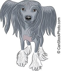 Vector Chinese Crested Dog. - Chinese crested dog with long...