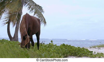 Tied horse eating grass on the shore