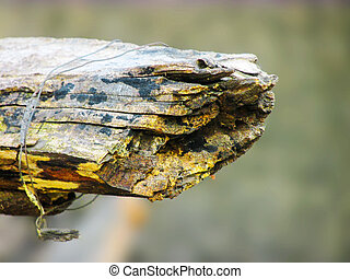 Rusty decomposing wood,dying to end - Rusty wood decaying...