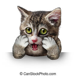 Surprised Cat - Surprised cat character as a purebred kitten...