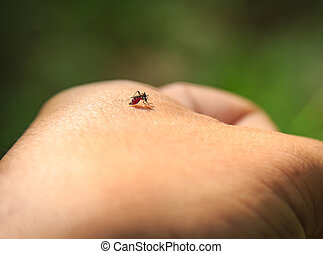 Mosquitoes are biting the hand