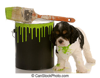 mischievous american cocker spaniel puppy with green paint...