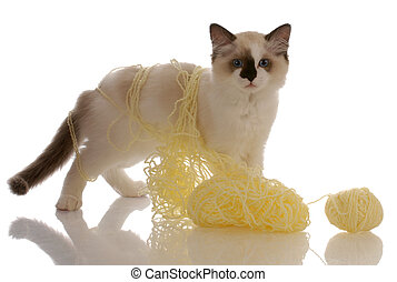 purebred ragdoll kitten playing with yellow yarn