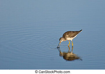 Lone Sandpiper in Shallow Water