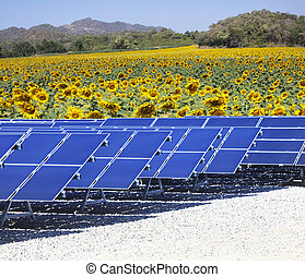 sun solar cell panels nad sunflowers field use as natural...