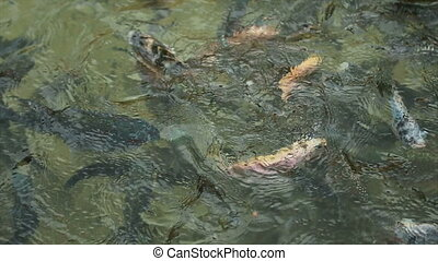 Fish in The Pond 05