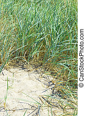 seagrass - some seagrass over beach sand