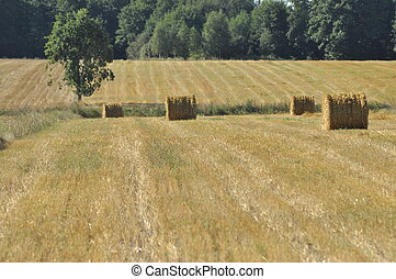 Harvest stubble, the end of summer, Poland