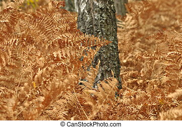 Fern leaves in the forest. Dead leaves. Brown color. Autumn...