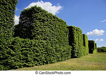 Abstract view of hedge against blue sky.
