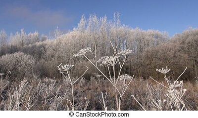 winter landscape and hoarfrost