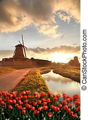 Holenderski, wiatraki, Z, czerwony, tulipany, Zamknięcie,...