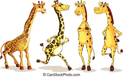 giraffes - Illustration of different poses of giraffe