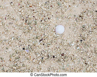 sand with fragments of shells - sand interspersed with...