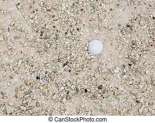 Areia, com, fragmentos, de, conchas,