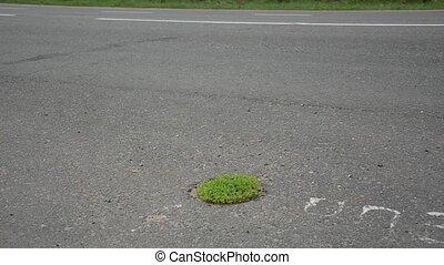 Grass grows through the asphalt. A small oasis