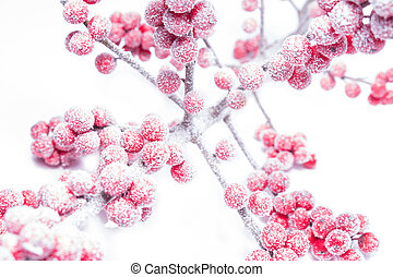 icy rowanberry on white background