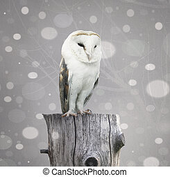 Barn Owl with snow - A beautiful barn owl above a trunk with...