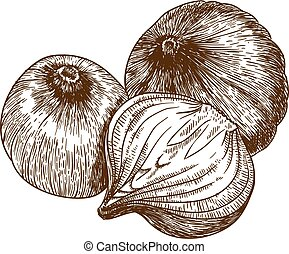 vector illustration of three onion