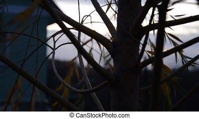Tree at dusk. The camera moves