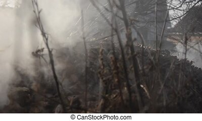 Burning grass, wood, peat, forest. The camera moves