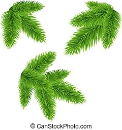 Fir Tree Branch, Vector Illustration