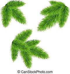 Fir Tree Branch, Vector Illustration