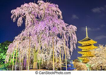 Kyoto, pagoda, en, el, primavera,