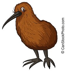 Kiwi bird - Illustration of a close up kiwi bird