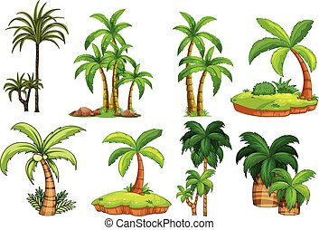 Palm trees - Illustration of different kind of palm trees
