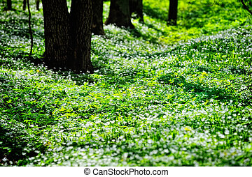 Herbage - Dark trunks of trees among the flowering plants