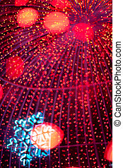 Defocused red christmas lights