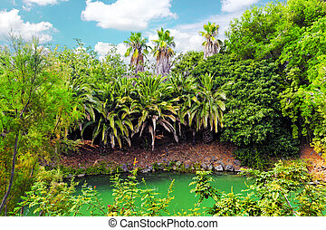Beautiful landscape of humid tropical jungle.Tropic