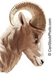 Mountain goat - Illustration of a head of a mountain goat