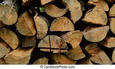 stack fresh cut birch and pine logs