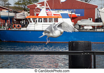 sea gull flying at harbor