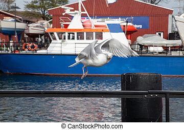 sea gull flying at harbor