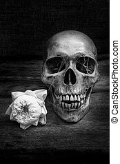Still life with a skull human. - Human skull on old wood...