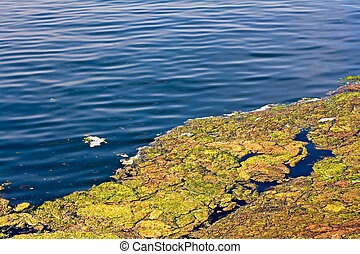 Build up of algae on the surface of a lake