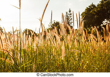 Grass flowers with sky background.
