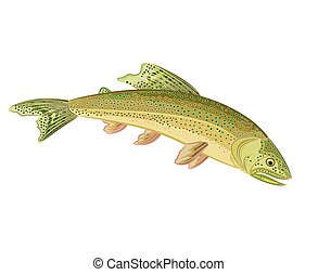 American brook troutsalmon-predatory fish eps 8 vector