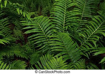 Wild Ferns - Wild ferns after a mild spring rain