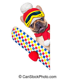 dog ski winter - fawn french bulldog dog with ski equipment,...